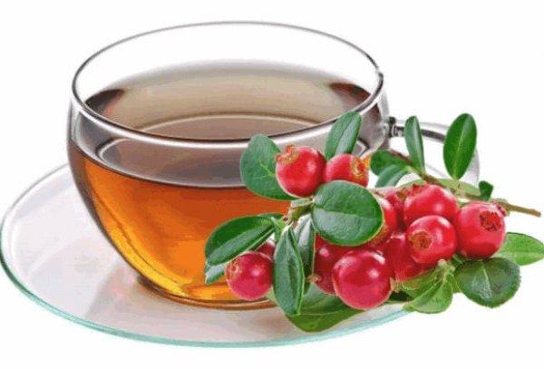 чай из брусники для лечения олигурии
